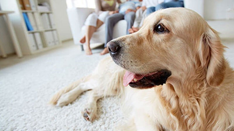 Pet Stain Removal Lexington